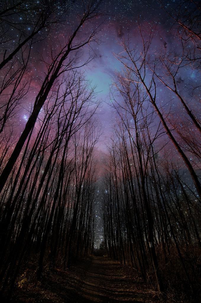 真夜中の森