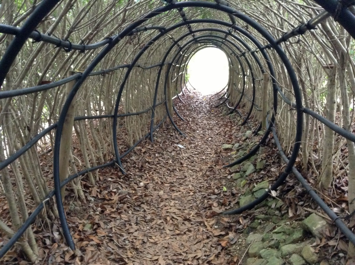 トトロのトンネル出入口